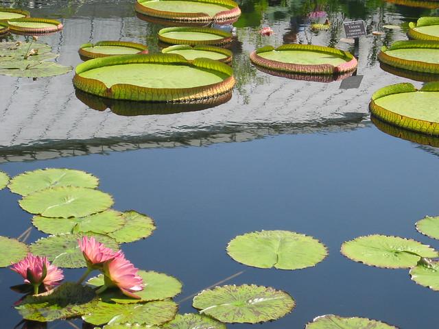 New York Botanical Gardens The Bronx Flickr Photo Sharing