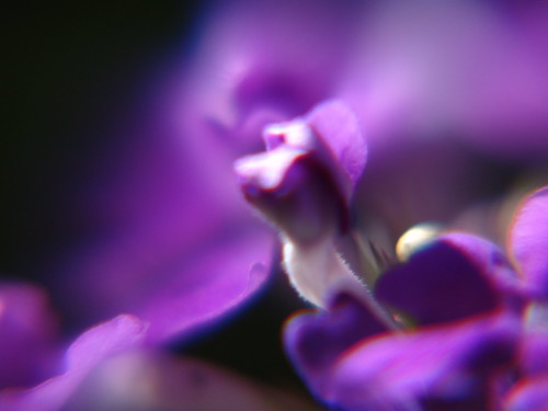 Flower Macro 9.4.2005 | by Notley