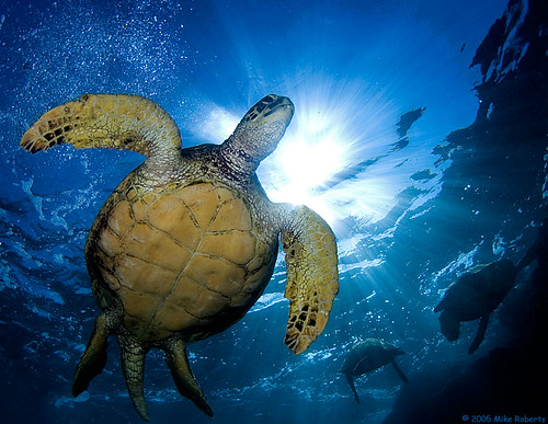 Turtle in the Sun | by Reeflections