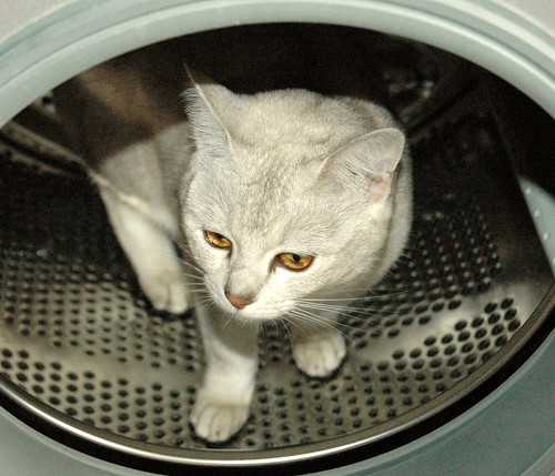 golden eyes in the tumble dryer | by ramtops