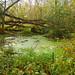 Fallen trees, Seven Oaks Road, Bailieboro, ON