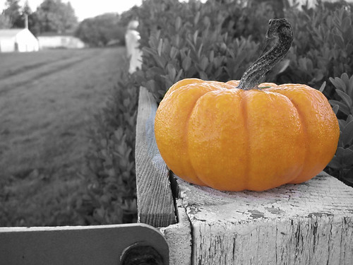 pumpkin-post-BW | by RandomConnections