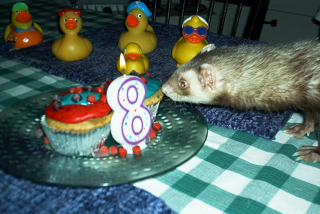 Ferret Birthday Cake