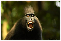 Angry Monkey | by dboy