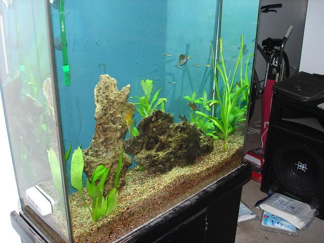 My fish tank flickr photo sharing for Fish tank camera