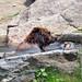 Bronx Zoo_2015 05 24_0143