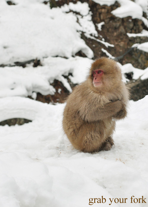 Snow monkey at Jigokudani Monkey Park, Nagano
