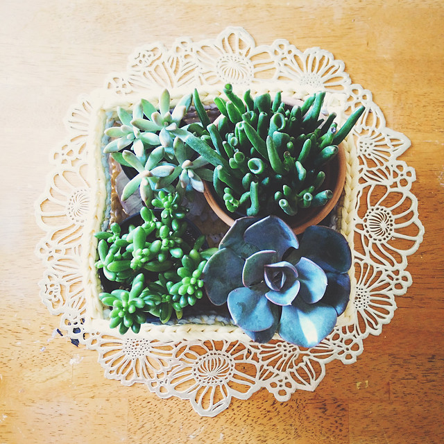 basket of succulents