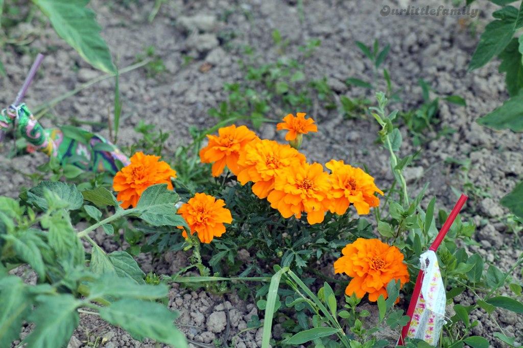mon jardin 21