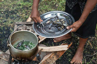 Mozambique tilapia is simmered with cabbage and coconut milk, Taflankwasa village, Malaita Province, Solomon Islands. Photo by Filip Milovac.