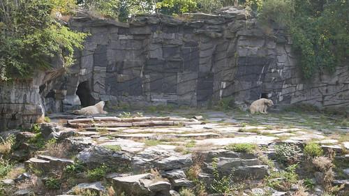 Eisbären in der Hitze