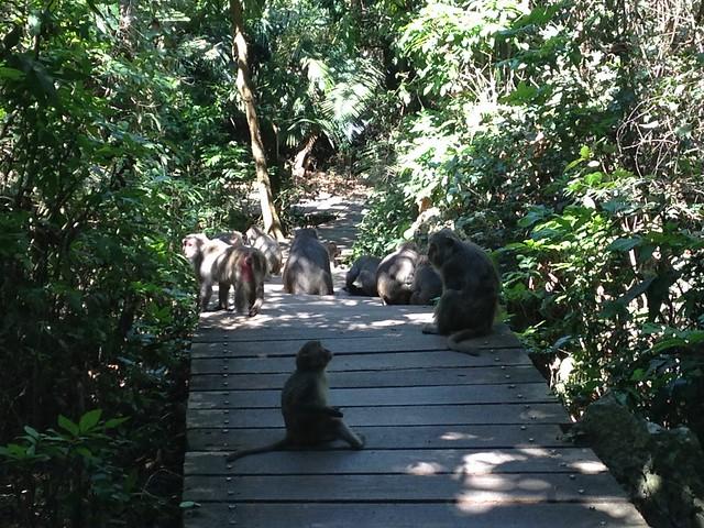 9.減少人與野生動物的互動與衝突。圖為柴山的台灣獼猴。攝影:廖靜蕙
