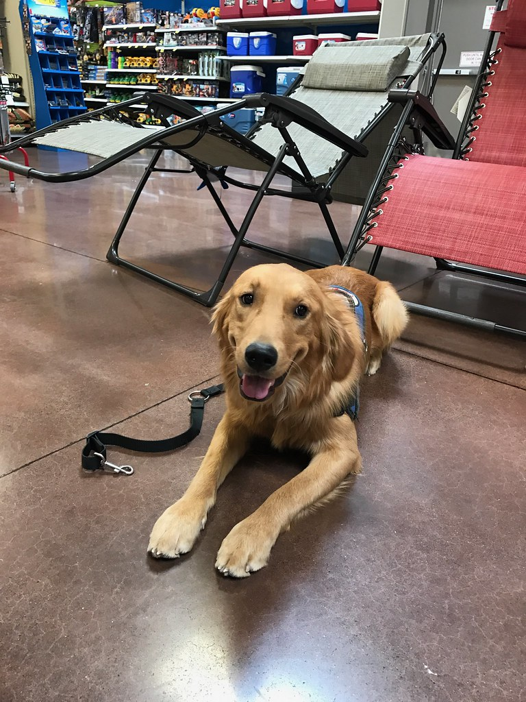 how to get a diabetic alert dog for free
