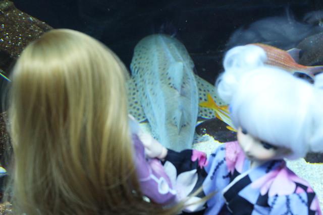 dd aquarium 7