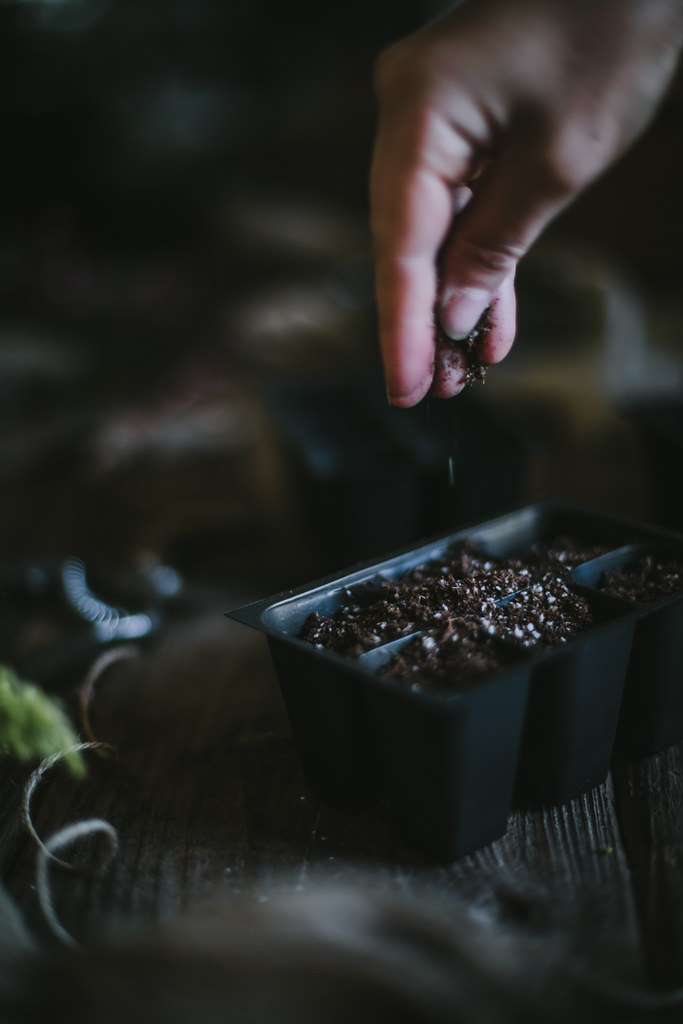 How To Start Seeds by Eva Kosmas Flores | Adventures in Cooking