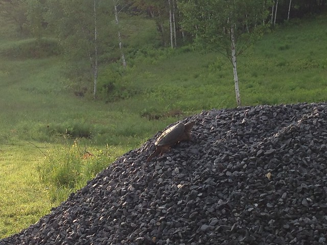 Climbing the gravel pile