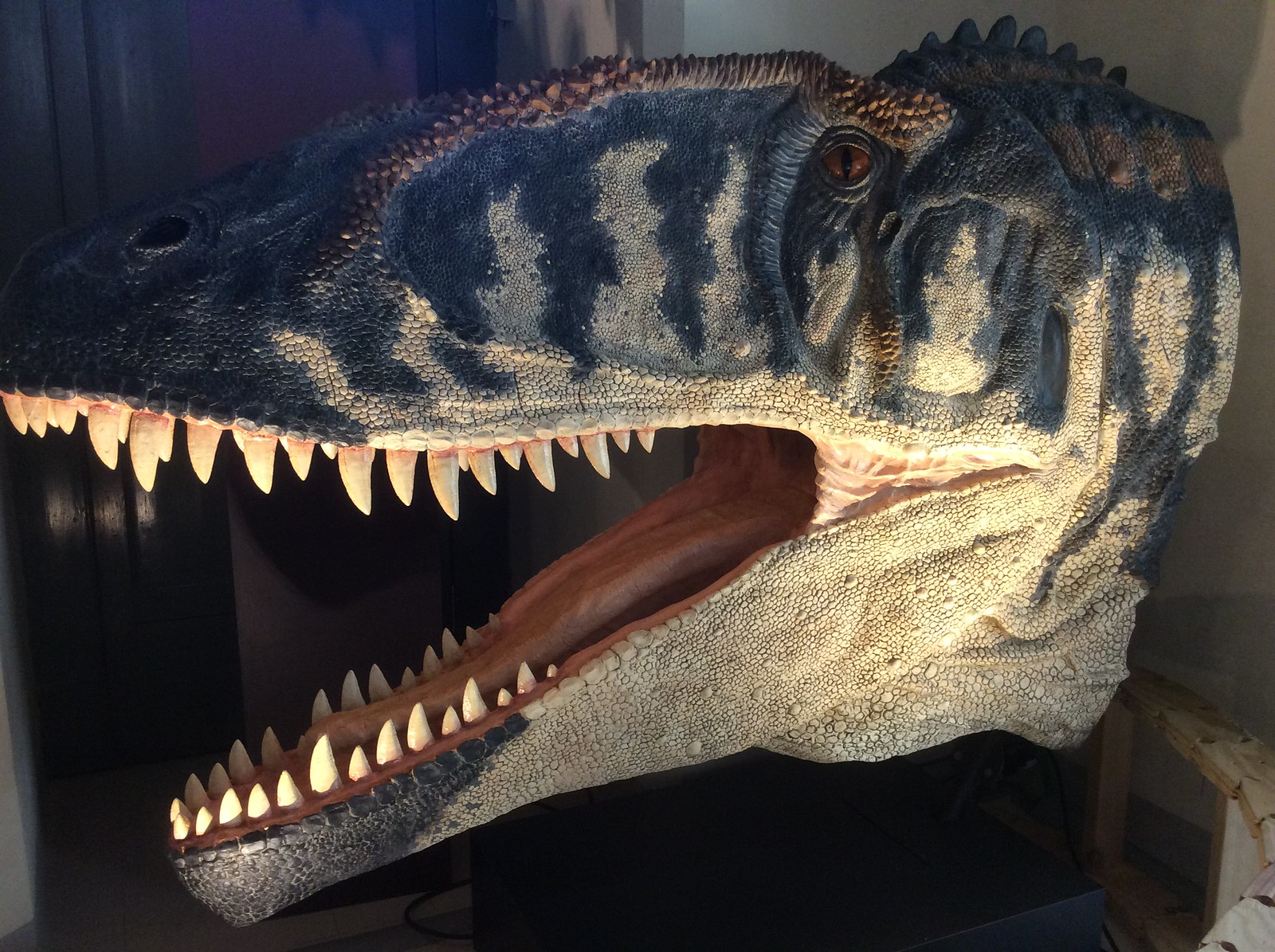 Carcharodon Avatar