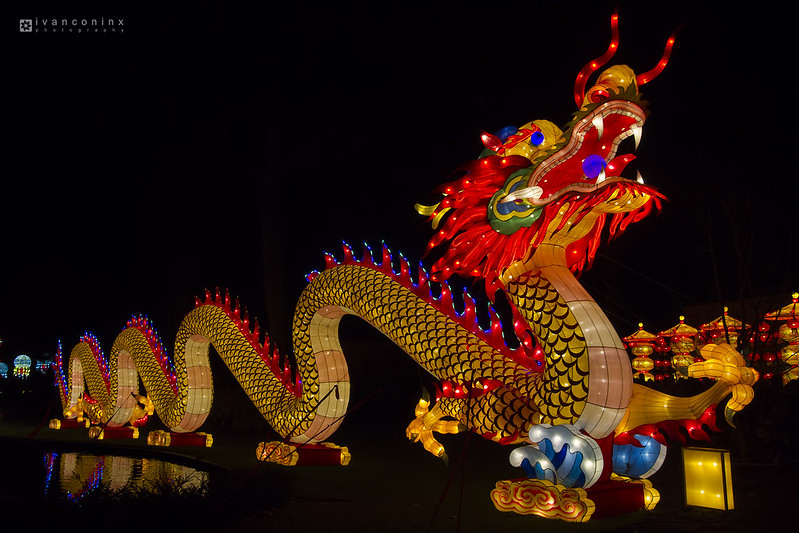 China Light Zoo – Antwerp – 2016 12 27 – 19 – Copyright © 2016 Ivan Coninx