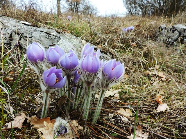 Spring in Slovak Karst National Park, Slovakia