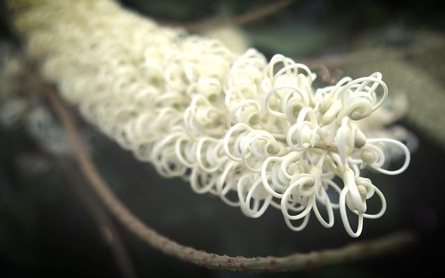 Ivory Curl Flower