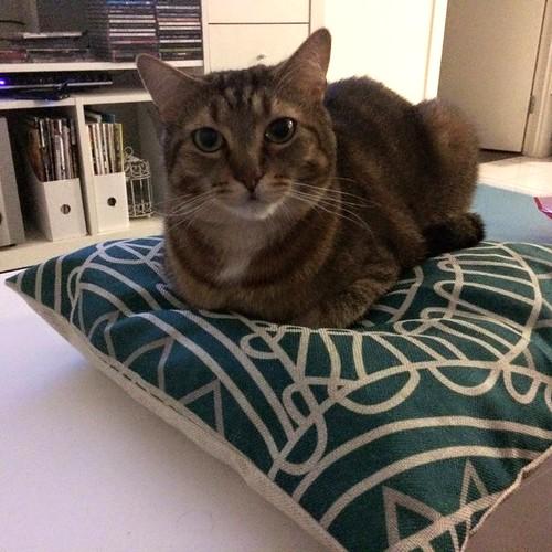 Seth on a cushion
