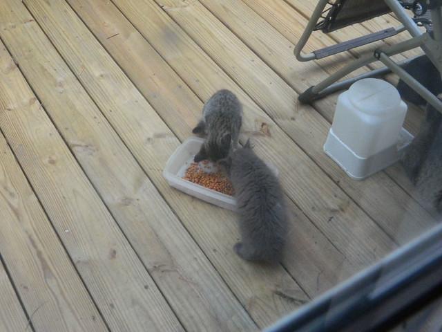 The Third Kitten