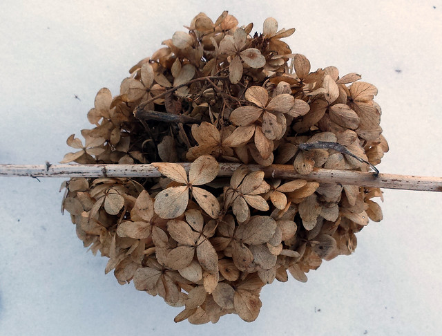 globe of brown flowers on snow, held down by a stem