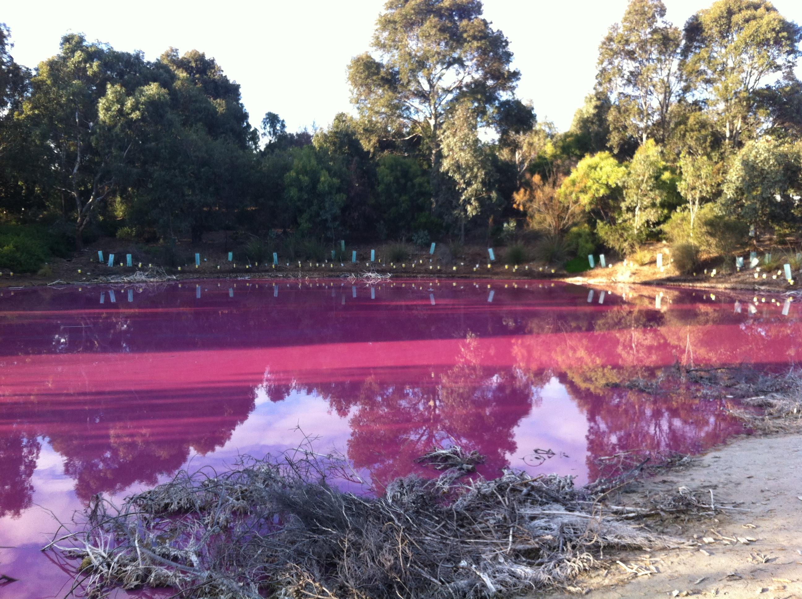 Pink Lake Melbourne