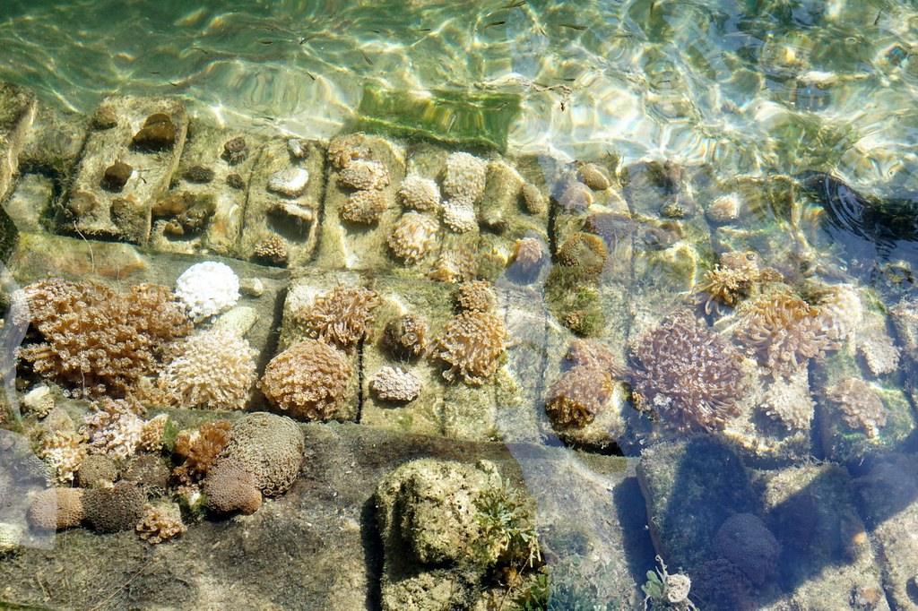 Andaman langkawi - coral nursery-022