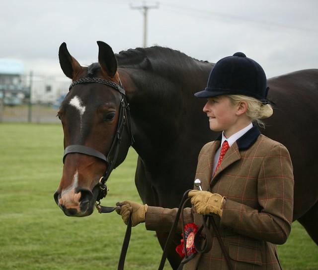 Sport Horses In Hand
