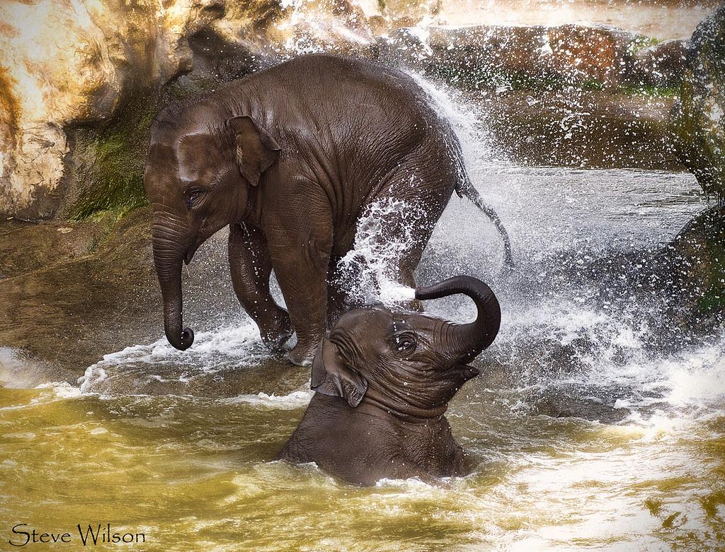 Con The Elephant Kids Movie
