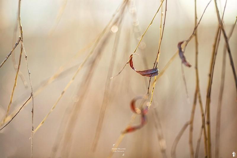 golden artistic photography