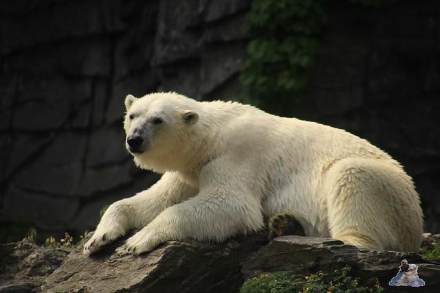 Tierpark Berlin 13.06.2015   79