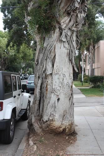 An overgrown urban tree