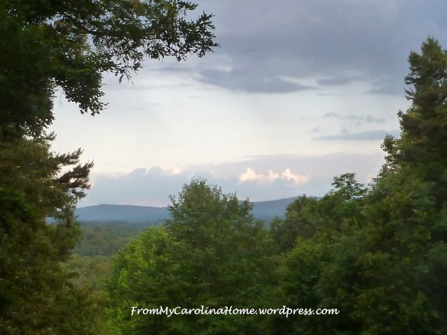 June Evening | From My Carolina Home 2