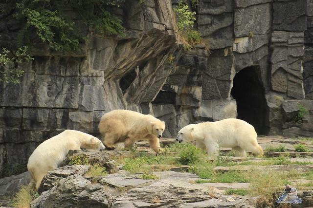 Tierpark Berlin 13.06.2015   199