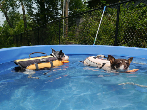 2015-06-29 - Swimming with Rennie & Mags - 0012 [flickr]
