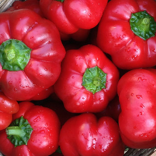 pimiento-peppers-web-475 | by Farm Fresh To You -