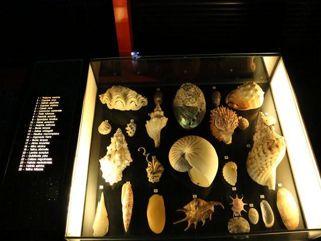 muzeul maritim 7 obiective turistice macao