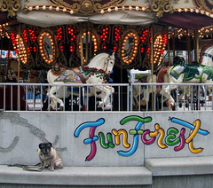 Pug With Merry-Go-Round | by zoomar