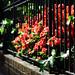 Red Flowers through Black Iron