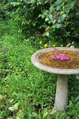 Bird Bath at The Berry Farm | by whooz_queen