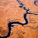 Colorado River Snake