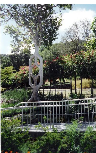 Circus Trees Bonfante Gardens Gilroy Ca Melissa