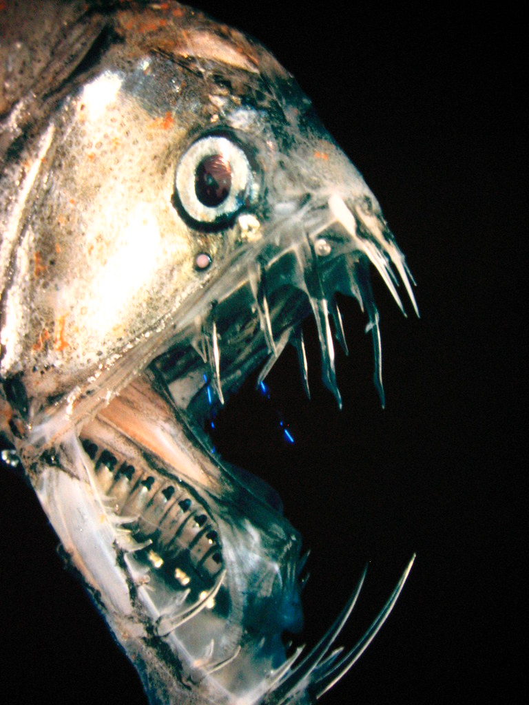 Deep sea fish are scary this is a photo of a photo i for Deep ocean fish