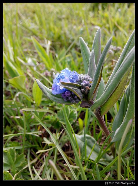 2015-05-30-IMG_20150530_163919