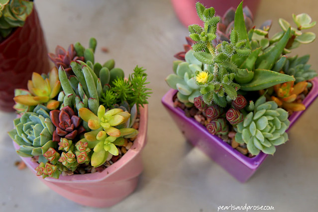 farmers_succulents_web