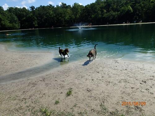 Dog Wood Park In Jacksonville Fl