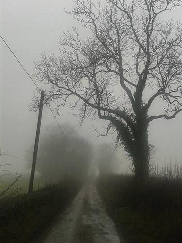 Misty Lanes