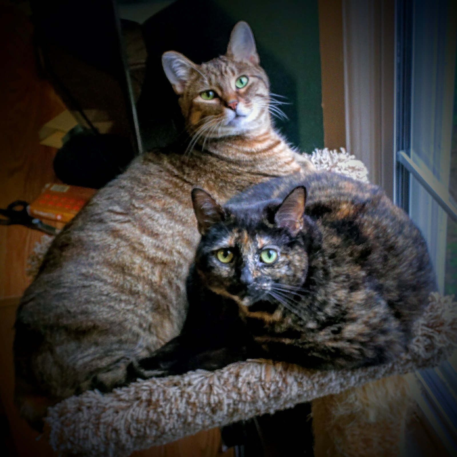Buster and Lucille share a moment on the perch together